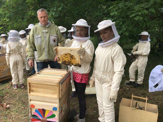 Auf jeweils rund 30.000 Bienen sind die beiden Bienenvölker der Umweltgrundschule in einem Jahr angewachsen, Foto: LEAG