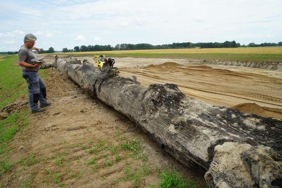 Eichenstamm aus der Neißeaue (B112) ist im Jahr 199+/-10 v. Chr. umgestürzt und von Schwemmsanden überdeckt worden, Foto: BLDAM